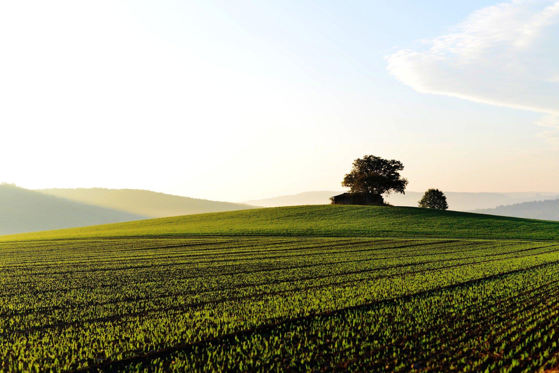 Thủ tục xin thay đổi mục đích sử dụng đất