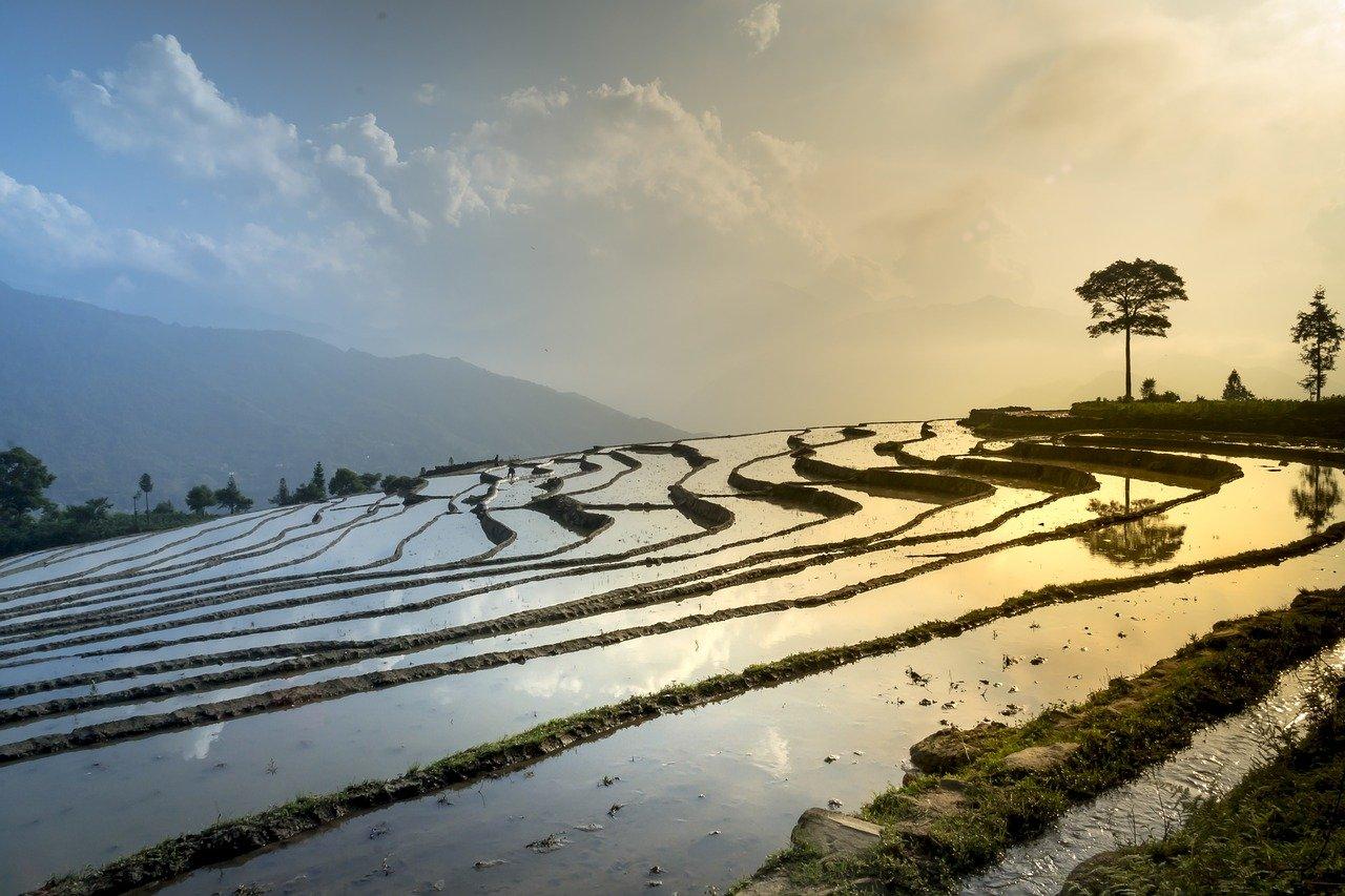 rice field 3490060 1280 - Thủ tục tặng cho quyền sử dụng đất